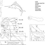 Swordfish Hunter diagram