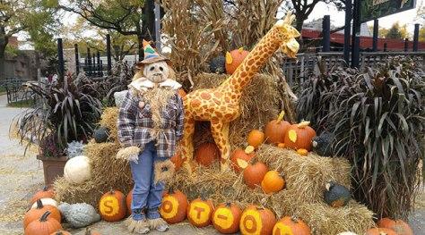 Pumpkin-Carving-Giraffe-Display-with-Scarecrow